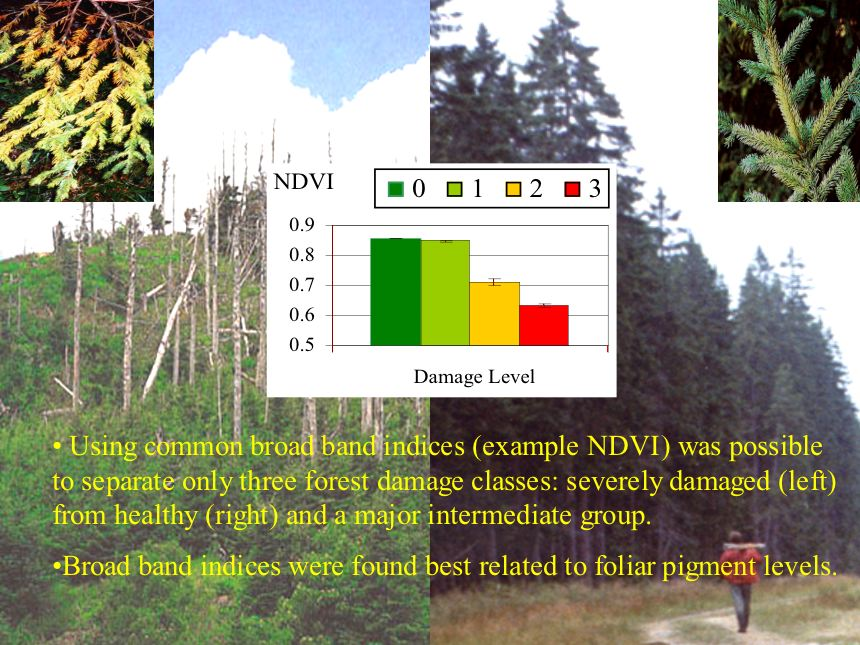 Forest physiology assessment using high (10mm) spectral resolution imagery (continued)