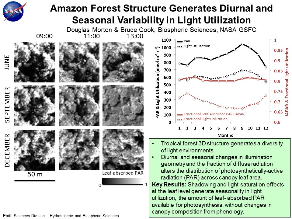 Amazon Forest Structure Generates Diurnal and  Seasonal Variability in Light Utilization