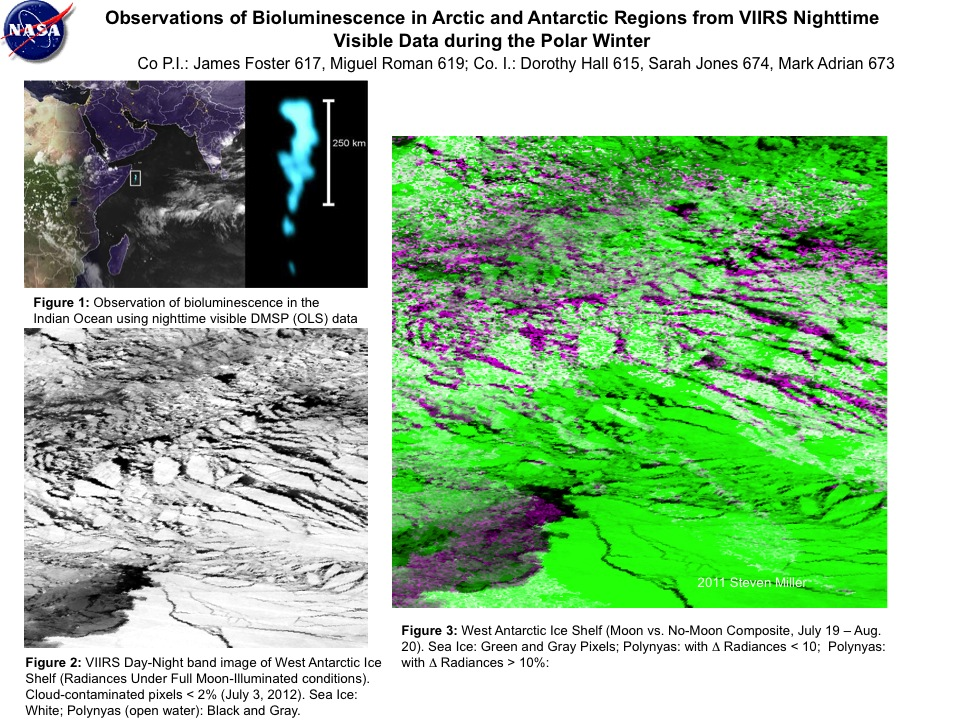 Observations of Bioluminescence in Arctic and Antarctic Regions from VIIRS Nighttime Visible Data during the Polar Winter