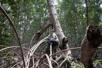 Laura Duncanson in Pongara National Park mangrove forest (Goddard Space Flight Center).
