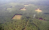 Siberia's Damschen landscape as seen from the air.