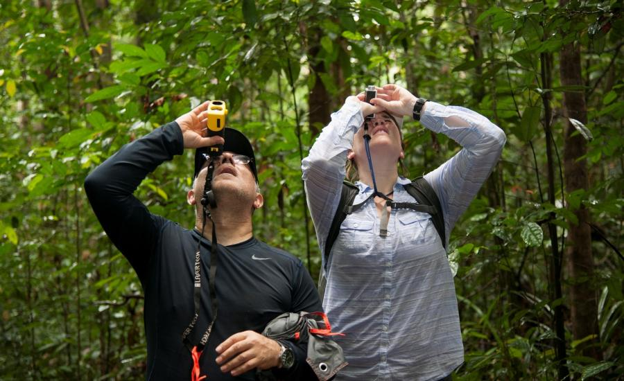 Laura Duncanson and Sassan Saatchi comparing forest canopy height measurements for a very tall tree in Mondah Forest, Gabon.
