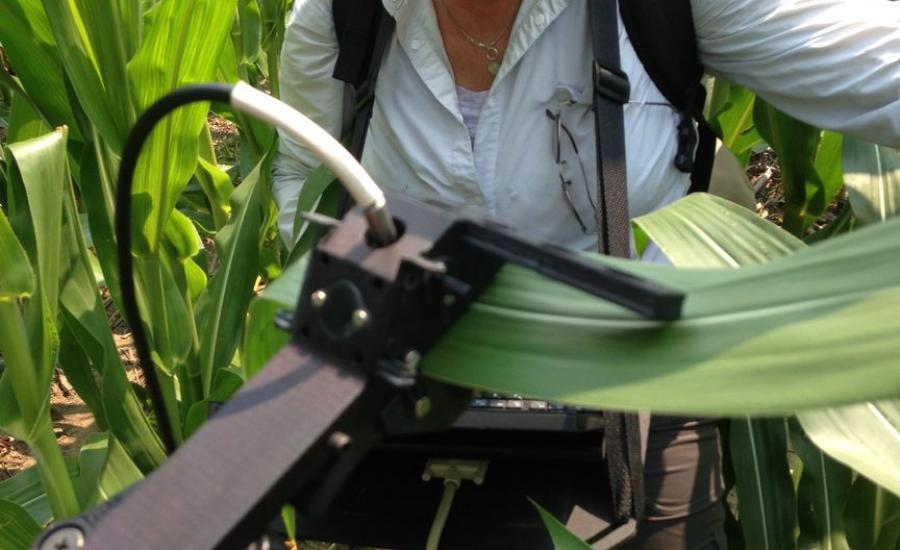 Dr. Petya Campbell (UMBC, Code 618) measures leaf spectral reflectance and fluorescence in the USDA Beltsville Agricultural Research Center cornfield. The in situ leaf measurements are compared with direct measurements of leaf photosynthesis and leaf chemistry.